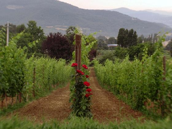 Le Vigne 2,3,4,5,6 pers, een van onze vakantiehuizen in Umbrie